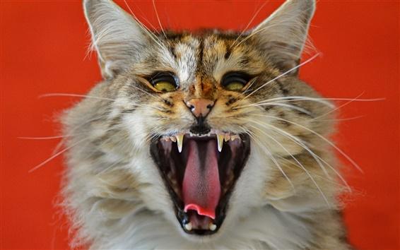 壁紙 猫のあくび、口、牙