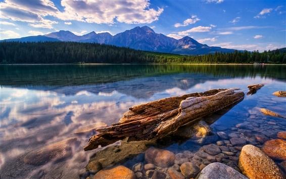 Fondos de pantalla Clear Lake, montañas, bosques, trozos de madera, piedras, nubes