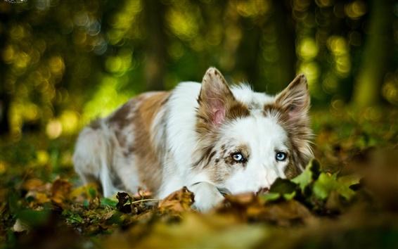 배경 화면 개 나머지, 가을