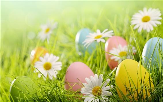 Wallpaper Easter eggs, white daisies flowers, grass