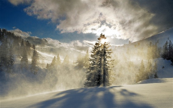 Wallpaper Forest, snow, winter, mountains, fog, clouds, sun