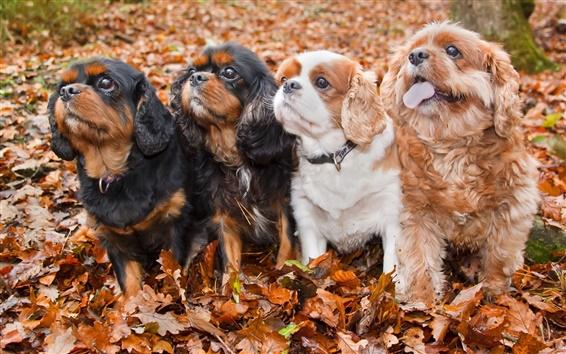 Обои Четыре милые собаки, листья, осень