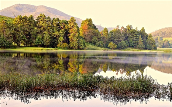 배경 화면 호수, 숲, 나무, 안개, 아침