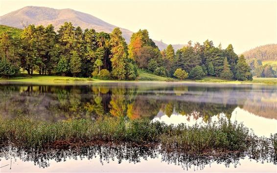 Fond d'écran Lac, forêt, arbres, brouillard, matin