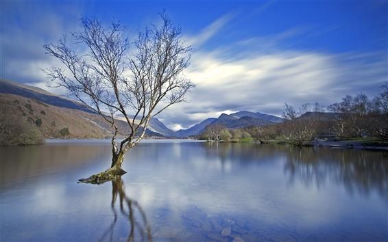 Обои Озеро, дерево, горы, облака, рассвет