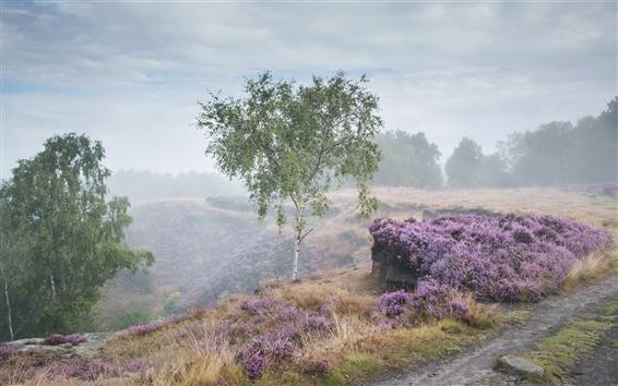 Fond d'écran Matin, brouillard, route, arbres, herbe