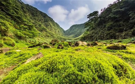 배경 화면 산, 계곡, 나무, 잔디, 바위, 구름