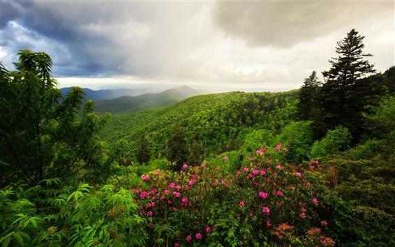Обои Горы, деревья, цветы, утро, облака, природа пейзаж