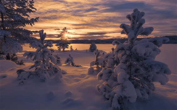 Wallpaper Norway, winter, thick snow, trees, sunset