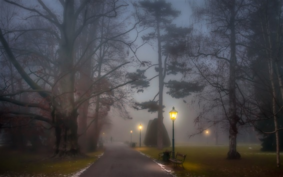 Wallpaper Park, foggy, path, lamp posts, benches, trees, night