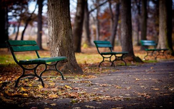 Обои Парк, аллея, скамейки, деревья, осень