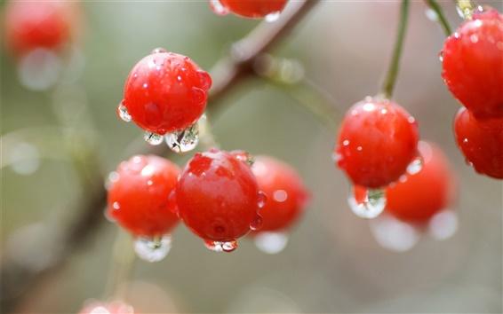 Обои Красная вишня, ягоды, капли воды, дождя, боке