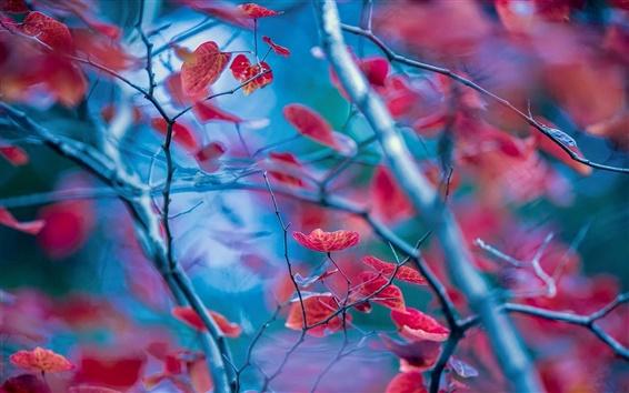 Обои Красные листья, веточки, осень, размытия фона