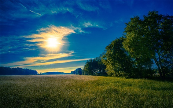 Обои Небо, солнце, облака, трава, поля, деревья