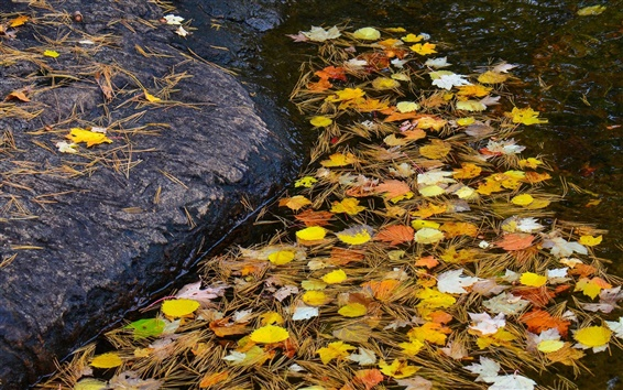 Fond d'écran Stream, la pierre, l'eau, les feuilles, l'automne