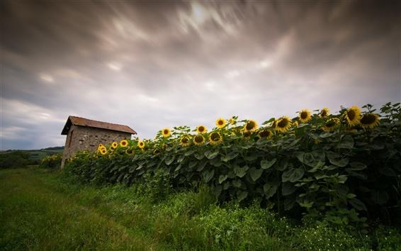 Wallpaper Sunflowers field, house, dusk