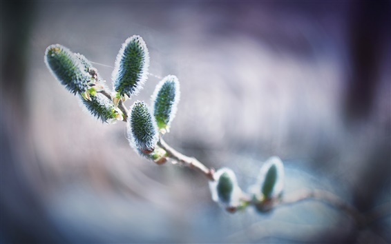 Wallpaper Twigs, spring, buds, bokeh