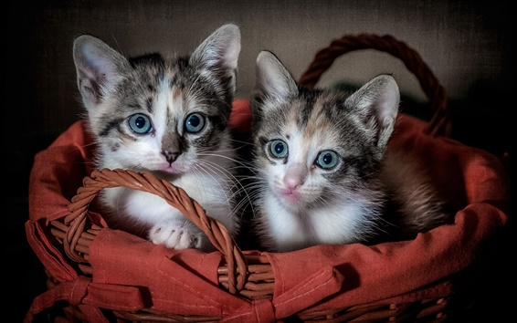 Wallpaper Two cute kittens, basket