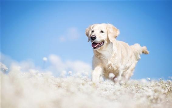 Wallpaper White dog, bokeh