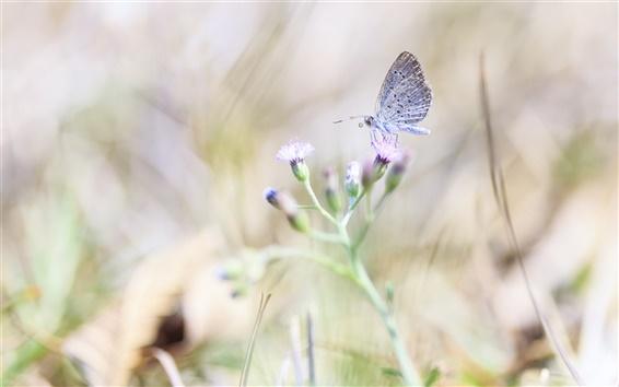 Wallpaper Butterfly, wildflower, bokeh