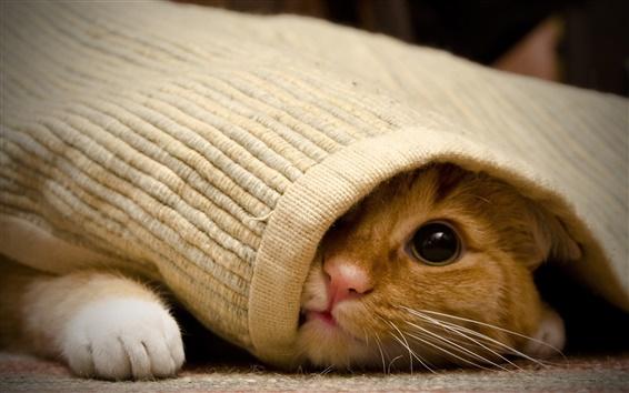 Обои Кошка под одеялом