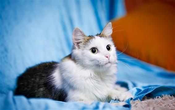 Обои Симпатичные домашнее животное, котенок, кошка, белый черный, глаза