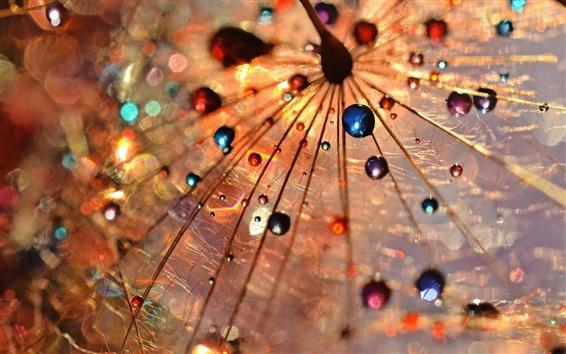Fond d'écran Dandelion macro photographie, des gouttes de rosée, coloré