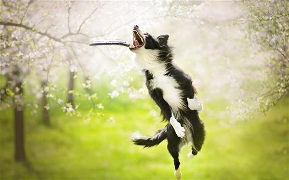 Papéis de Parede salto do cão, jogo do jogo