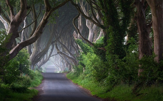 Wallpaper Ireland, road, trees, channel, morning, mist