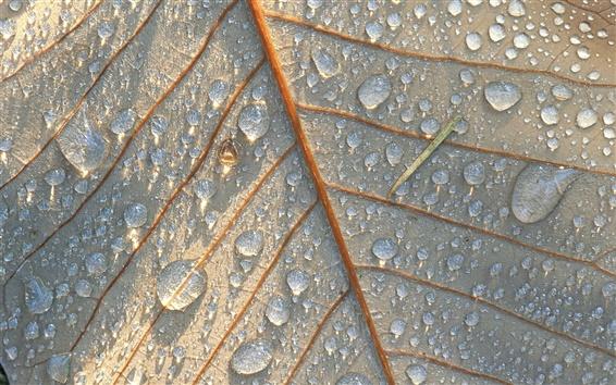Papéis de Parede Folha close-up, gotas da água