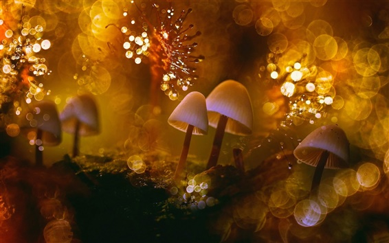 Wallpaper Nature macro, fungi, moss, dew, glare