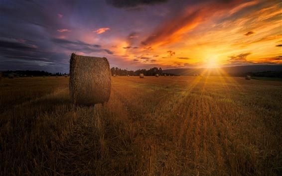 Обои Лето, закат, поле, сено, сумерек, красное небо