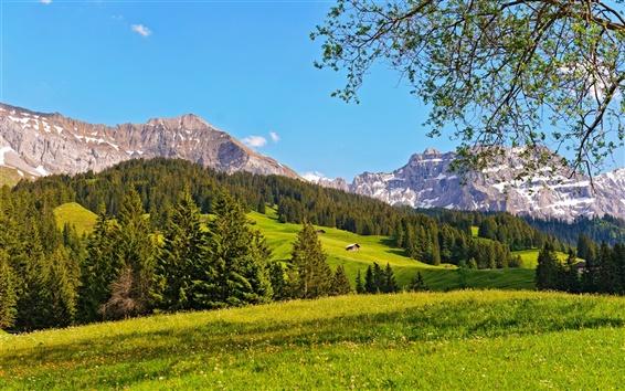Fond d'écran Suisse, Oberland bernois, les forêts, herbe, montagnes, ciel bleu