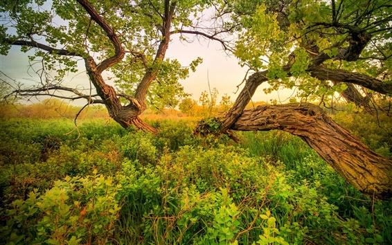 Wallpaper Tree, grass, nature scenery