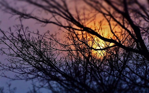 Wallpaper Trees, branches, sunset, silhouette