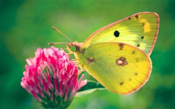 Wallpaper Yellow butterfly, pink flower