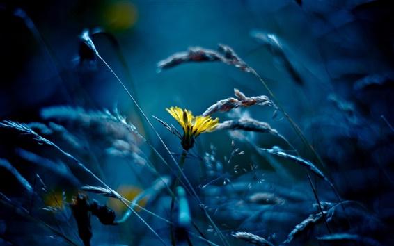 Fond d'écran fleur, herbe, bleu de style jaune