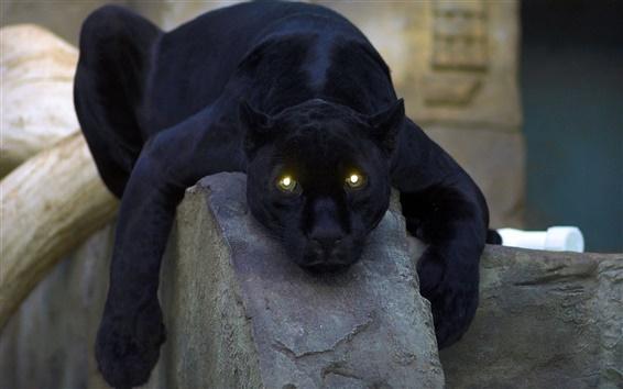 Обои Животное крупным планом, черная пантера, желтые глаза, свет