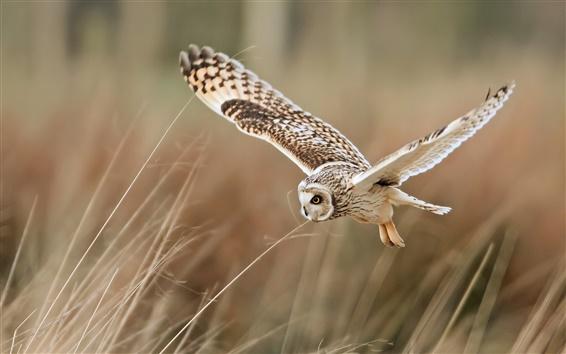 Fond d'écran Oiseau close-up, hibou volant, herbe
