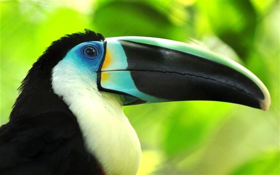Wallpaper Bird macro photography, toucan, beak close-up
