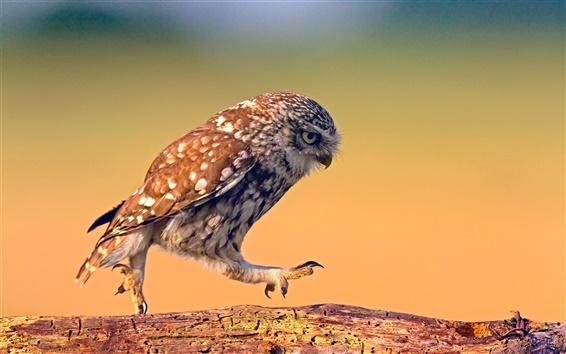 Обои Птицы крупным планом, сова ходьба, ствол дерева