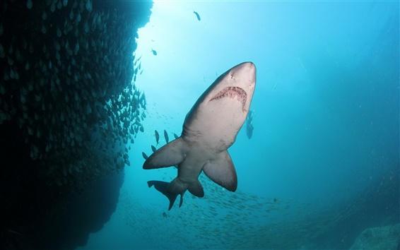 Обои Синее море, рыбы, акулы, подводный