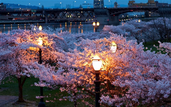 Wallpaper City, night, spring, trees, flowers, river, lamps