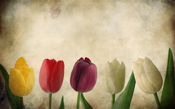 Wallpaper Colorful tulips, texture, flowers, paper