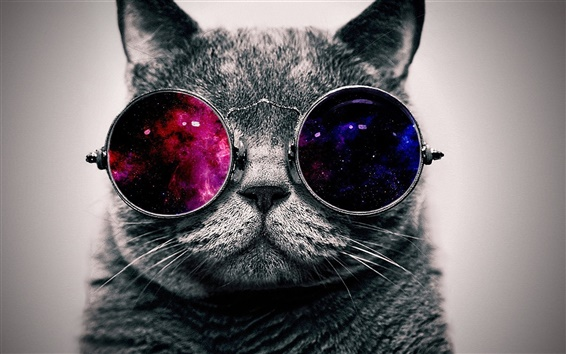 Wallpaper Cute cat with sunglass, very cool