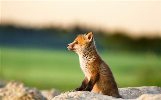 Wallpaper Cute little fox, cub, stone, bokeh
