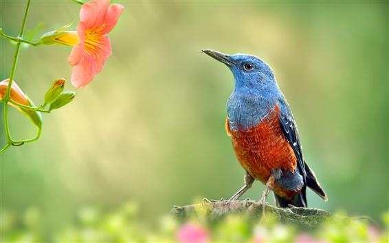 Fondos de pantalla Jardín, aves y flores rojas