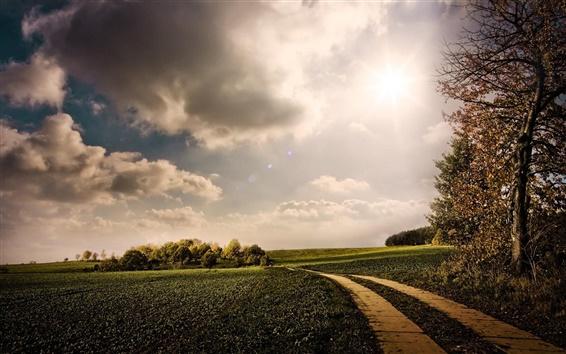 Обои Природа, зеленые поля, путь, деревья, солнце, облака