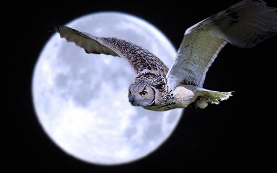 Fondos de pantalla vuelo del búho bajo la luna