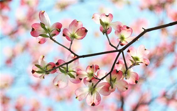 Wallpaper Spring, garden, twigs, pink flowers, petals